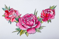 sketch beautiful red peonies on a white background.