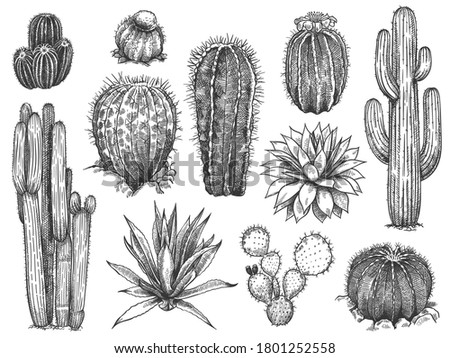 Sketch cactus. Hand drawn wild succulents, prickly desert plants, agave, saguaro and prickly pear blooming vintage black and white cactuses set on white background engraving  illustration.