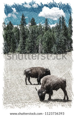 sketch effect picture of A herd of American Bison graze in a meadow near the North Rim of Grand Canyon National Park, Arizona, USA.