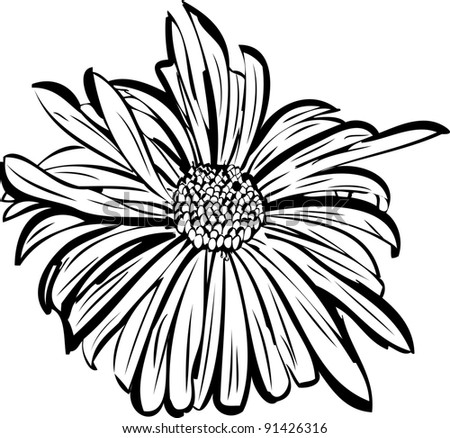 sketch of a flower garden resembling a daisy