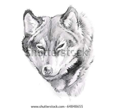stock photo : Sketch of tattoo art, wolf