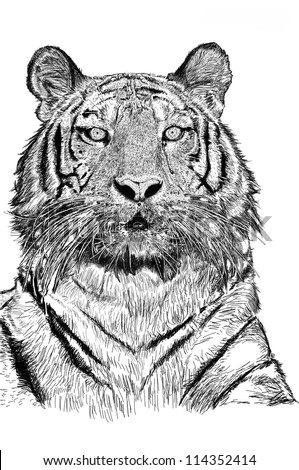 Sketch Tiger with Picture File JPEG
