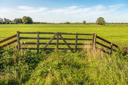 Skewed and weathered old wooden gate on the edge of a meadow in a Dutch polder. The cows are in a meadow further on. A blackberry bush and other wild plants grow near the fence. It's summer now.