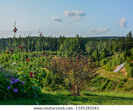 """Ski resort """"Igor"""" in the Leningrad region in the summer.  Summer slopes.  #1185285061"""