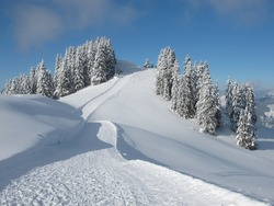 Ski slope and snow covered trees, Wispile