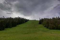 ski slope with green grass and pinetrees in the summer while hiking