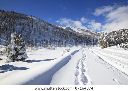 Ski tracks on a winter road in Sierra Nevada mountains, eastern California