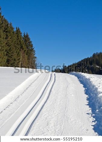 Ski tracks through the winter forest