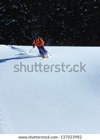 Skiing fresh powder with pines in the background.