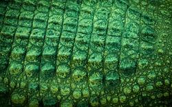 Skin Crocodile Green  texture