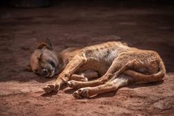Skinny Puppy lying in the sun