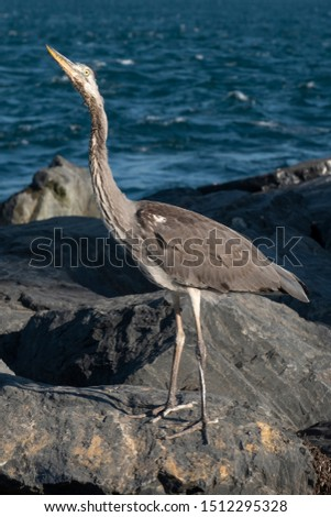 Skinny Seabird Standing On A Sea Rock, Istanbul, Turkey #1512295328