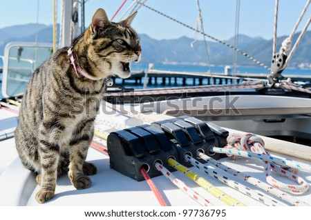 Skipper cat with sailing yacht rigging