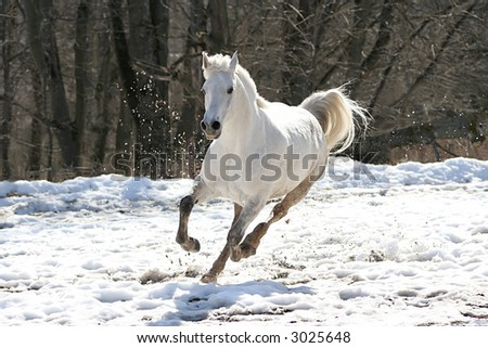 Skipping white horse on a background of a wood