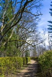 Skriveri Dendrological Park in Latvia. Spring sunny day. A trail among trees and bushes with young green leaves.