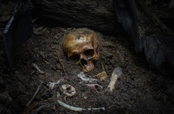 Skull and bone correct dig find buried in the forest deep. digged from pit in the scary graveyard in soil deep rot