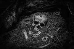 Skull and bone correct dig find buried in the forest deep. digged from pit in the scary graveyard in soil deep rot / Still life and art image. adjustment color black and white