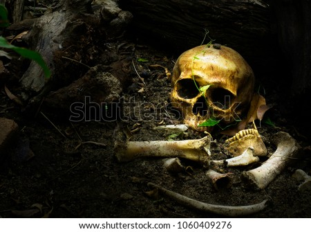 Skull and bones buried in the pit with old timbers,concept of scary crime scene of horror or thriller movies,Halloween theme, visual art ,still life style