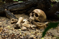 Skull and bones buried of human dug from a pit in the graveyard or cemetery on the ground in the forest, the concept of scary crime scene of horror or thriller movies, Halloween theme, still lifestyle