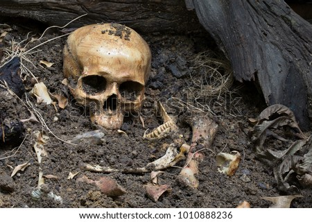 Skull and bones digged from pit in the scary graveyard which has dim light / Still life and art image Foto d'archivio ©