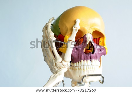skull and hand bone - stock photo