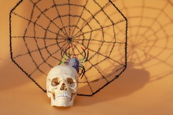 Skull and spider web, Halloween concept.