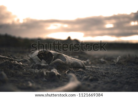 skull animal desert bones dry background skeleton head southwest dead hot landscape decay desolate water american death cow white steer canyon deer rack horns antlers  nature Foto d'archivio ©