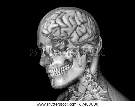 Skull Brain and Muscle Texture - stock photo