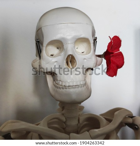 Skull closeup with a flower Stok fotoğraf ©