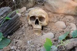 Skull conception Life after death vintage light.