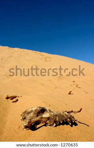 Skull in the desert