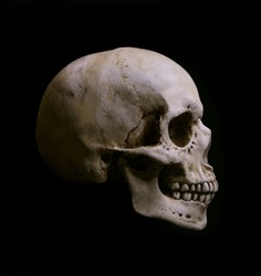 Skull Isolated on black