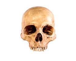 Skull,  Isolated on white background