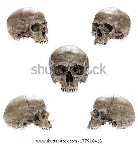 Skull model without jaw bone on isolated white background