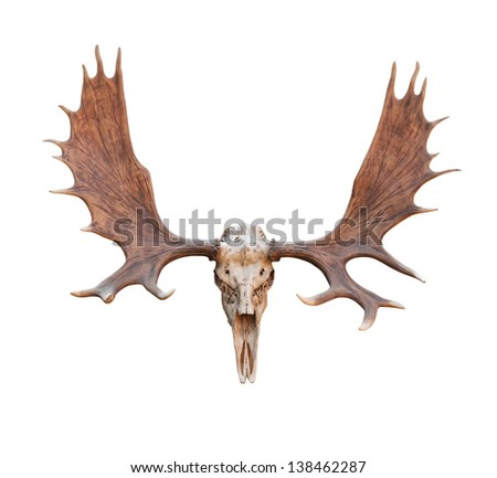 Skull Moose front view isolated on white  background