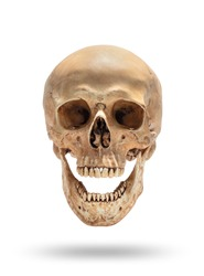 skull of human head and open mouth isolate on white background