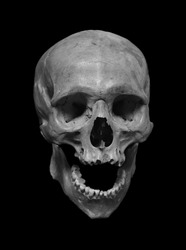 Skull of the human, black and white photo