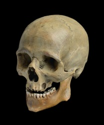 Skull of the human on a black background.