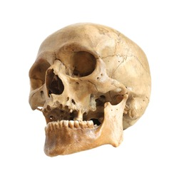 Skull of the person on a white background.