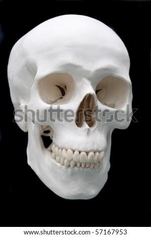 skull on black background for lab education