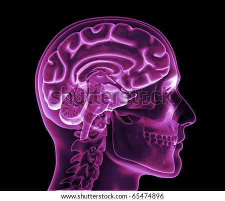 Skull XRay, Brain Hemisphere