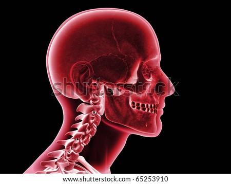Skull XRay, Side View