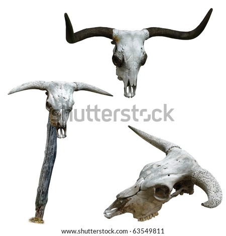 Skulls of cattle. One mounted on a pole.