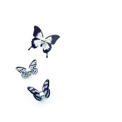 skulls with butterfly wings on white background. creative art surreal concept. minimal style