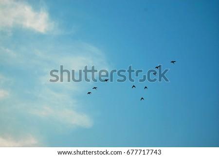 Sky  #677717743