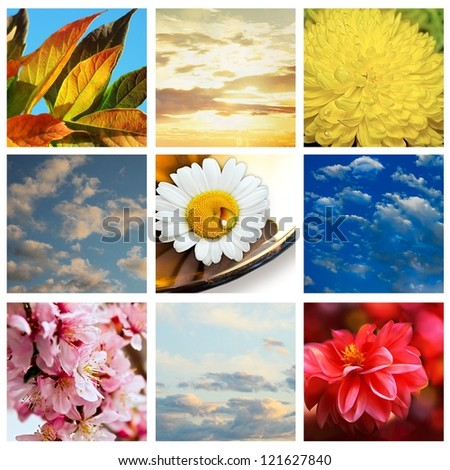 Sky and flowers collage with clouds, sun and different flowers - stock photo