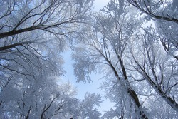 sky and frozen trees in winter forest