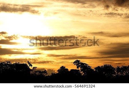 Sky in evening time with tree. #564691324