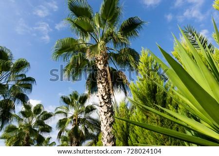 sky palms summer landscape #728024104