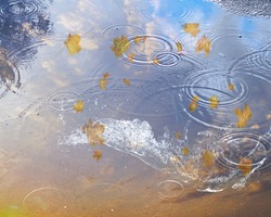 sky reflection in puddle water asphalt after rain bubbles rainy season autumn leaves fall building reflection on water